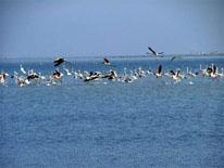 خليج ميانكاله